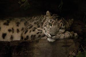 Leopard II by KarlDawson