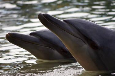 Dolphins by KarlDawson