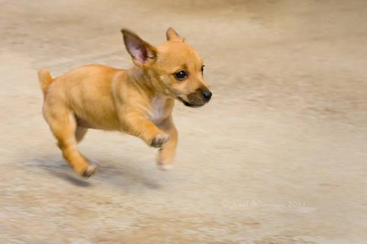 Jenny on the run