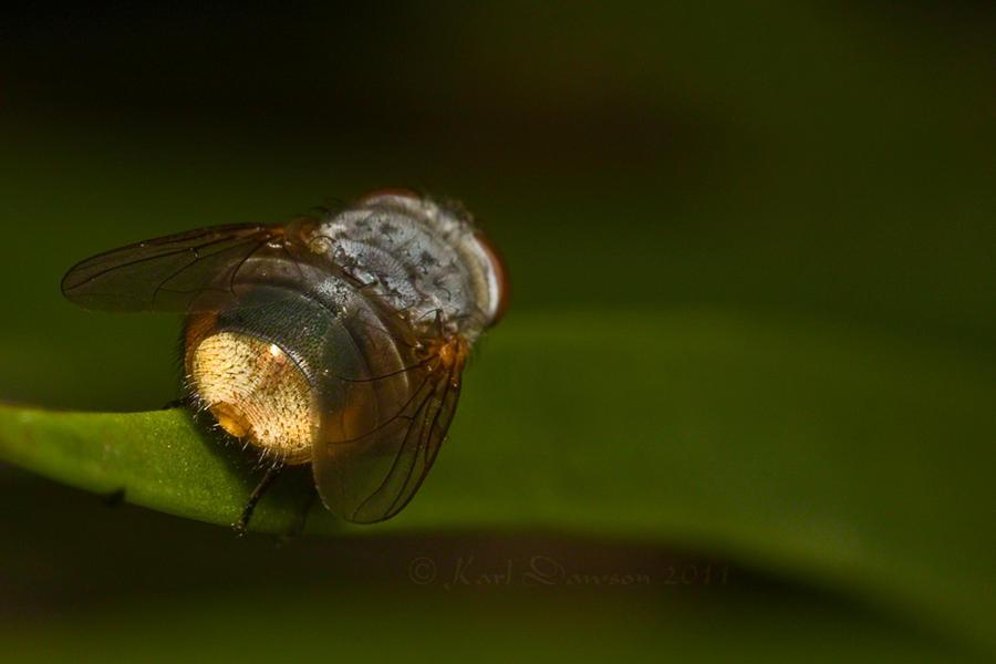 Fly Butt