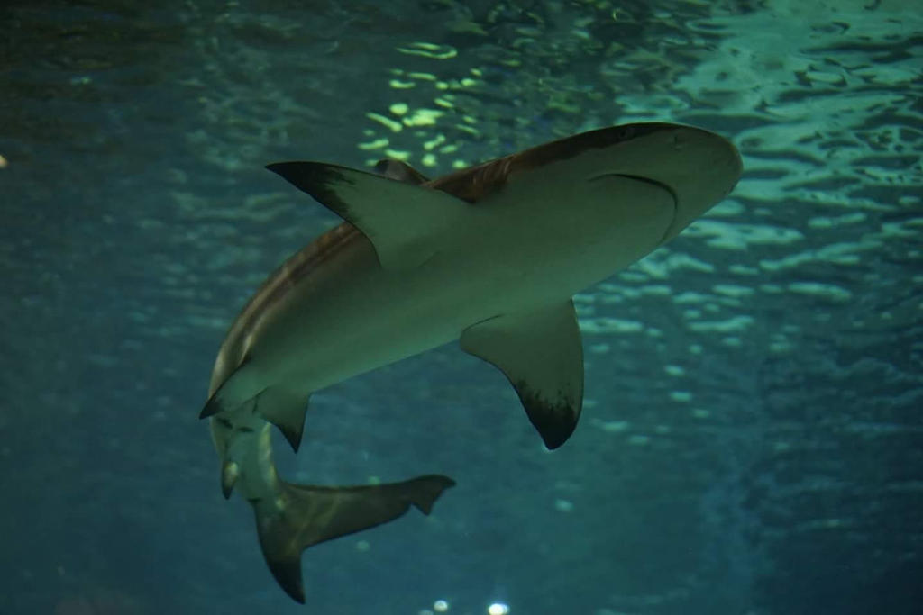 shark 3 by mycreed9004