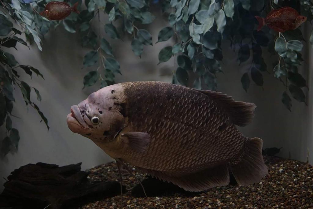 fish2 by mycreed9004