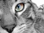 Cat Eyes III