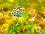 Eternity of a Butterfly... by Erylum