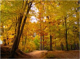 Autumn spirits... by Erylum
