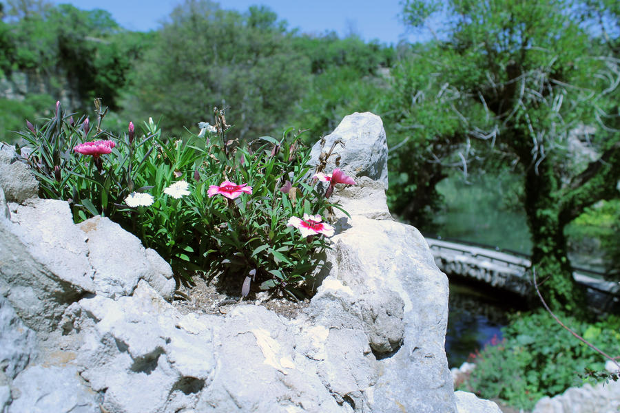 Chinese Tea Garden San Antonio 4 By Thecrow1299 On Deviantart