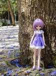 Ammina - Purple Sakura