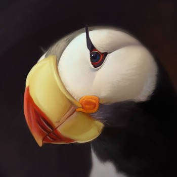Puffin study by Neboveria