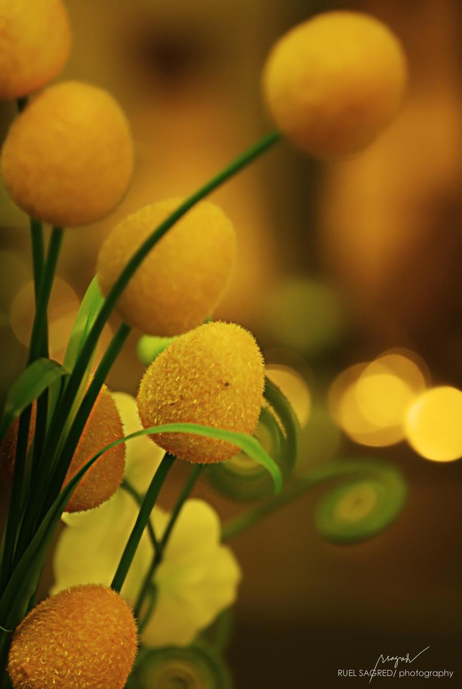 Orange - Page 3 Golden_flower__by_flashwindwhel-d4d76yq