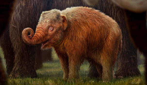 Strawberry blonde baby mammoth