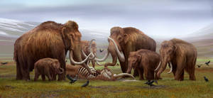 A mammoth mourning