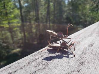Beetle Bug_ (Side) by DoctorQ2