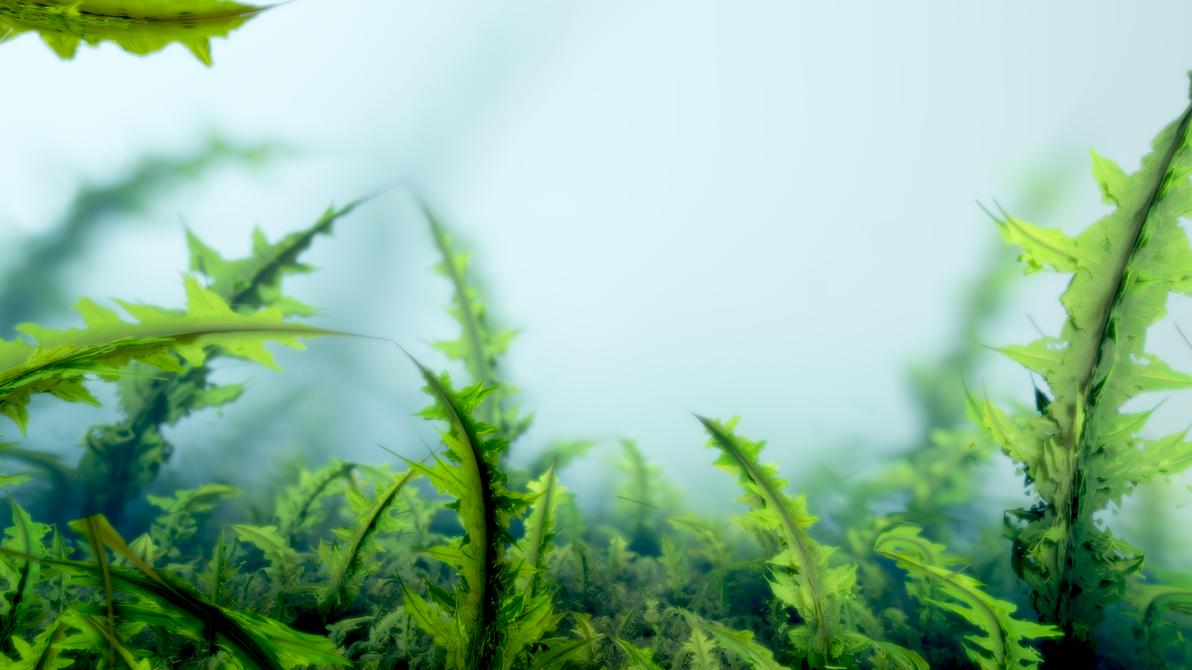 Grass by Crist-JRoger