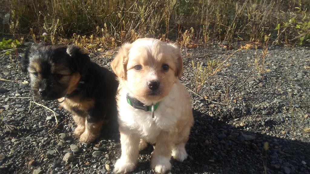 cute puppy by travisbernard