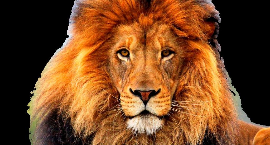 صور اسود سكرابز اسود صور اسود مفرغة png صور اسود lion_face_by_xoxo9696-d800gko.png