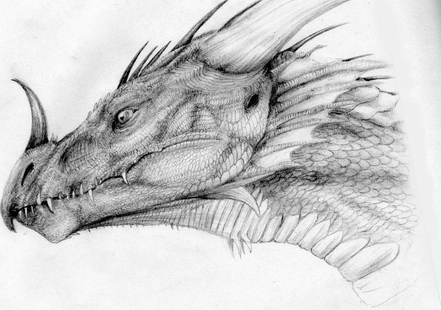 El Dragon by headbangerdragon on DeviantArt Drawings Of Dragons Realistic