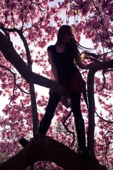 Magnolia Perch