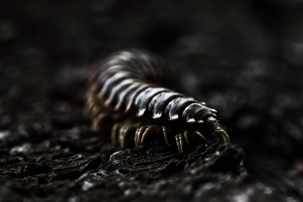 Creeper by BlackRoomPhoto
