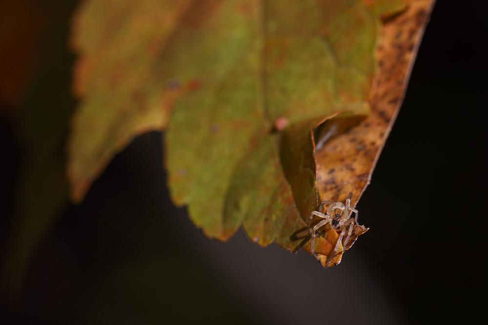 Hello Tiny Spider by BlackRoomPhoto