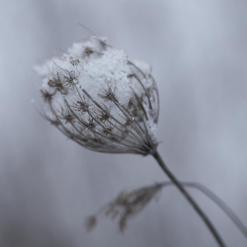 Snow Collector by BlackRoomPhoto
