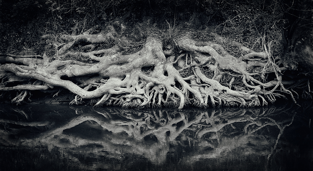 Roots by BlackRoomPhoto