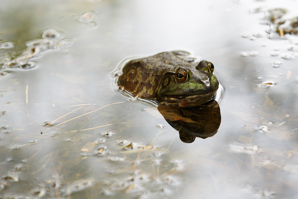 Sad Frog by BlackRoomPhoto