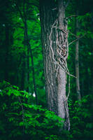 In The Trees by BlackRoomPhoto