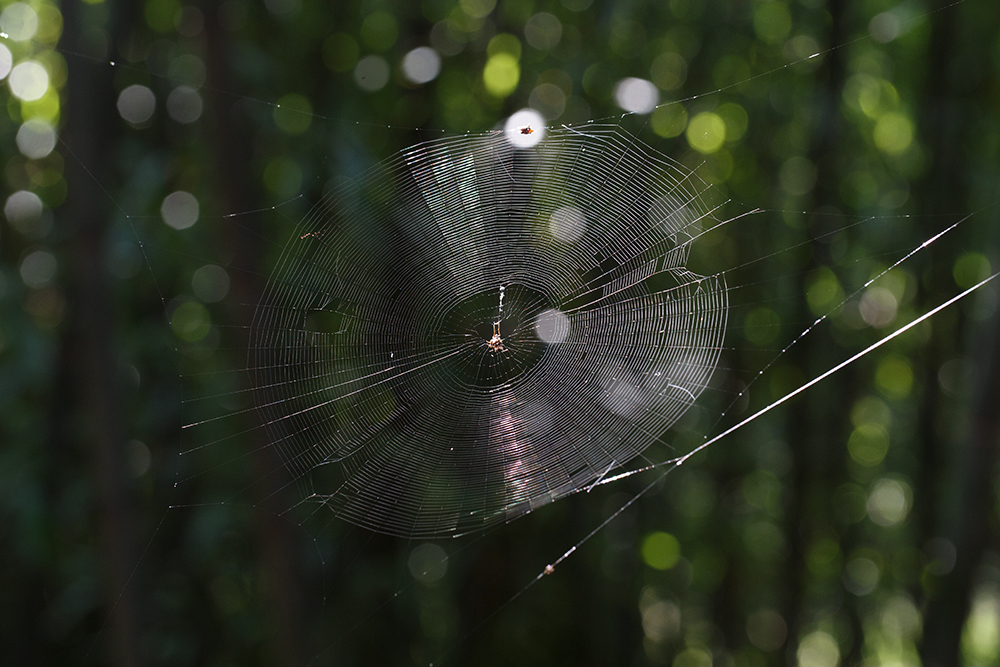 Web by BlackRoomPhoto
