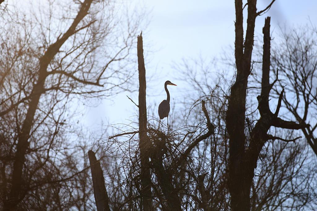 Heron Silhouette by BlackRoomPhoto