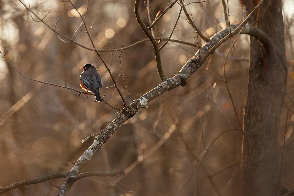 Hi Robin by BlackRoomPhoto