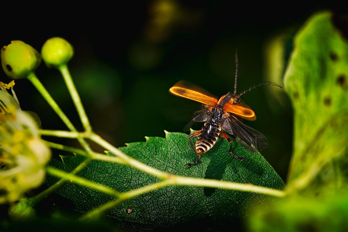 Take-off by BlackRoomPhoto