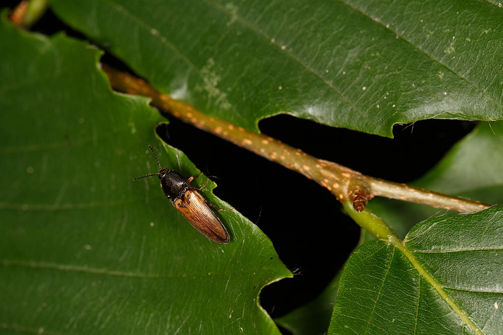 Beetle by BlackRoomPhoto