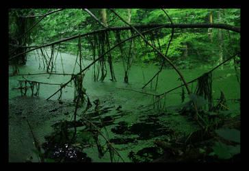 Swamp by BlackRoomPhoto