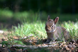 Baby Rabbit 8 by BenTPhotos