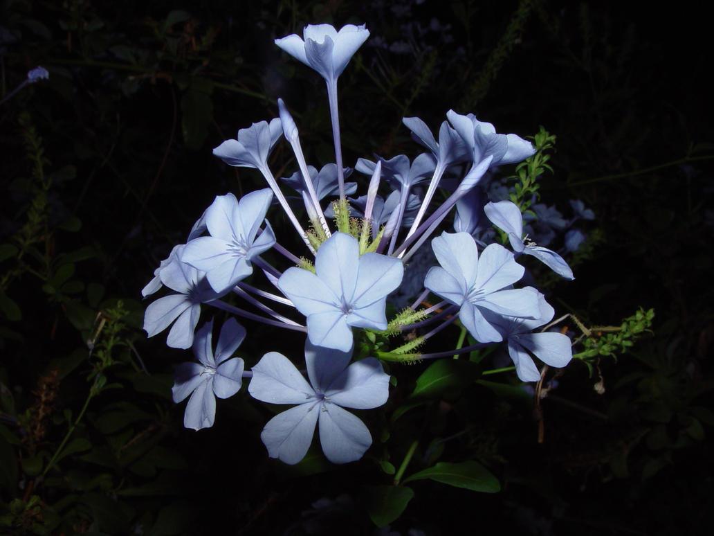 Night Flowers by Dallas 13 on DeviantArt