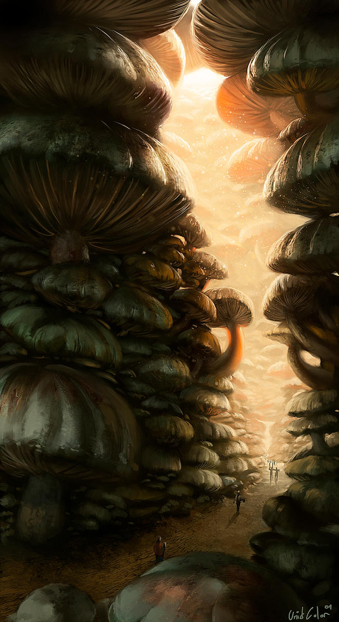 The secret path of mushrooms by UnidColor