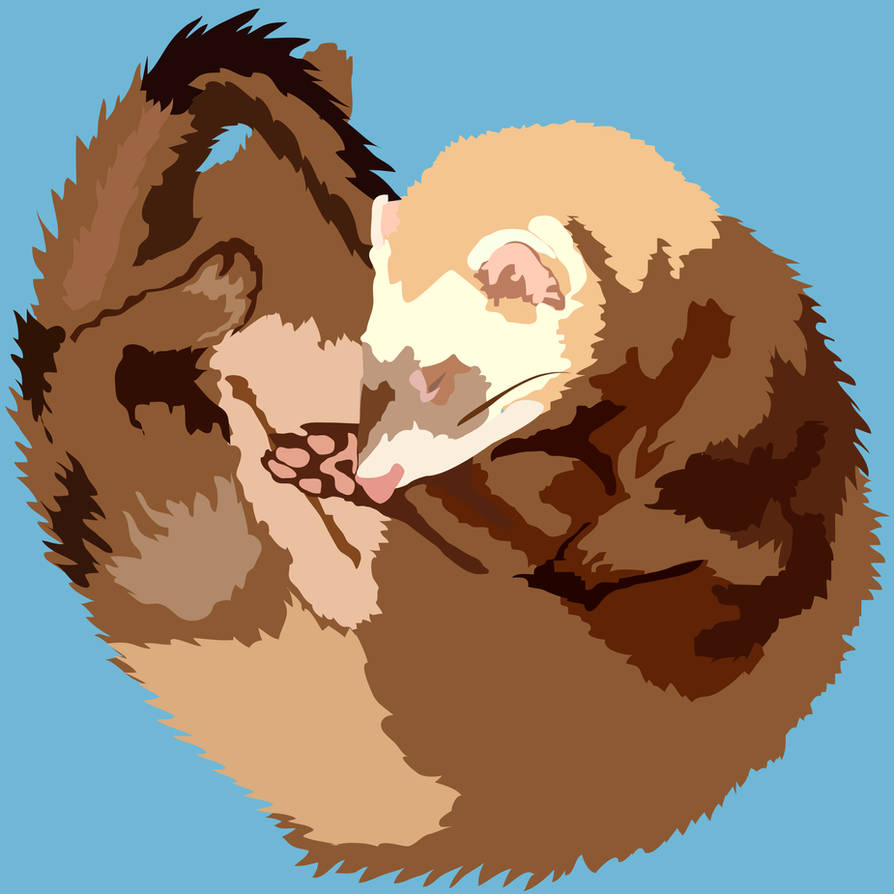Baby Ferret Sleeping