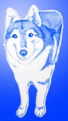 Ronin002 blue