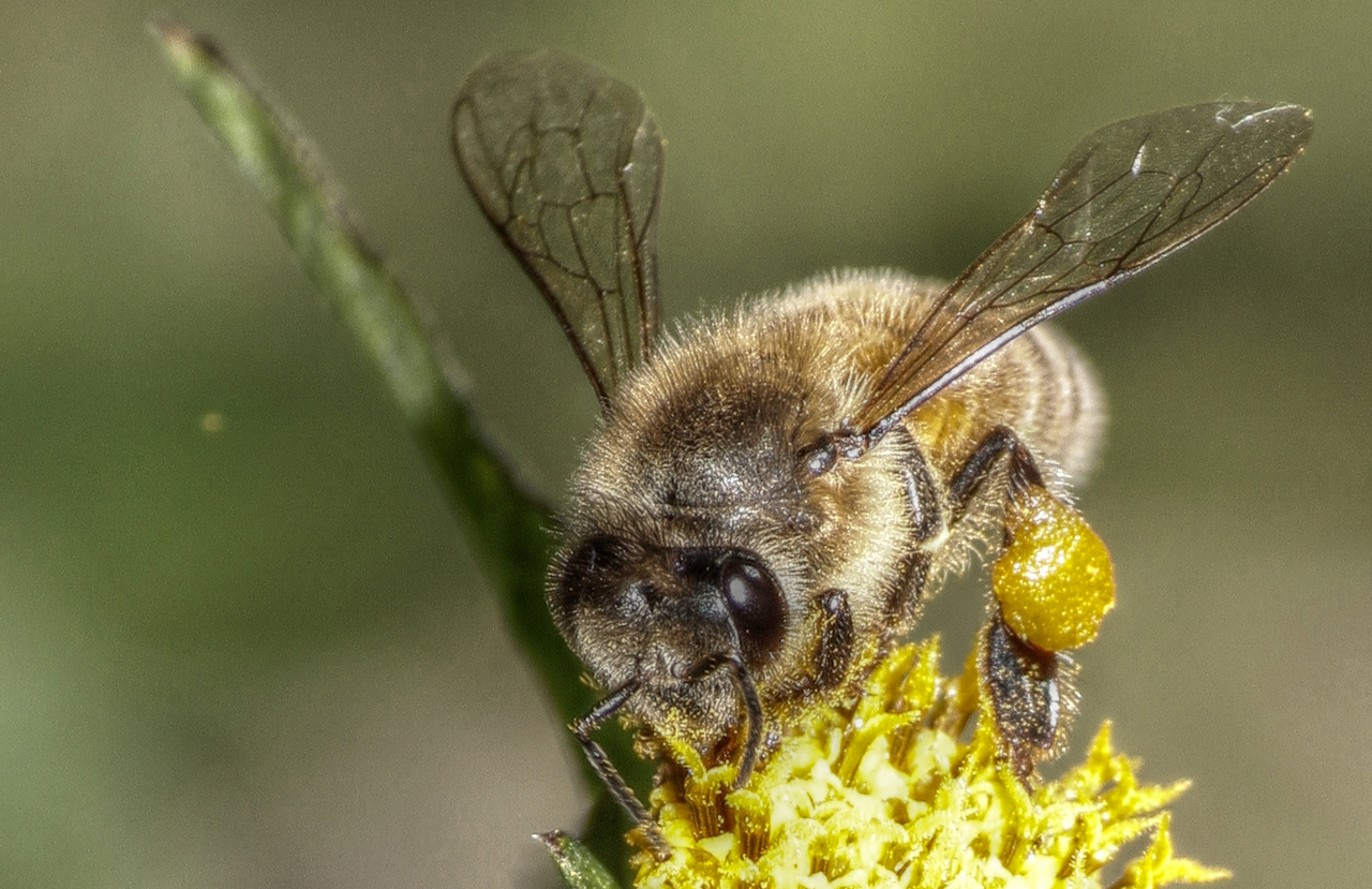 bee2380 by craigp-photography
