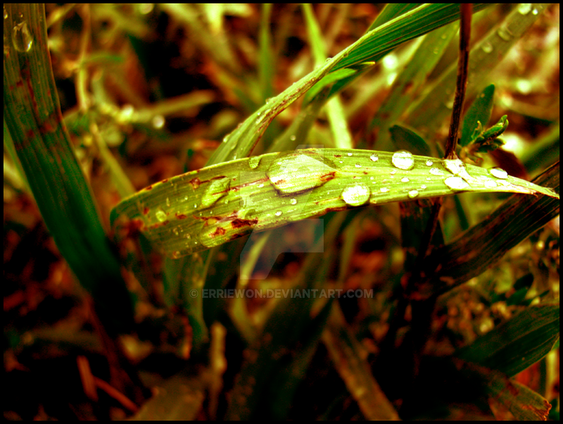 .:drops:. by Erriewon