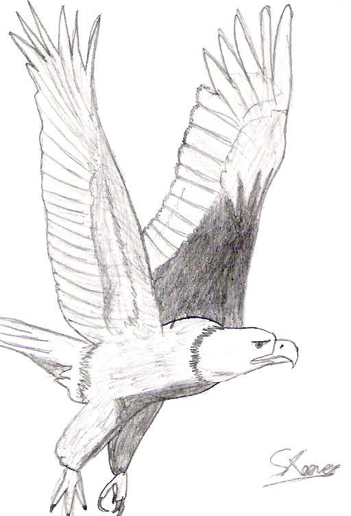 Bald Eagle flying by SpeedytheHedgehog on DeviantArt