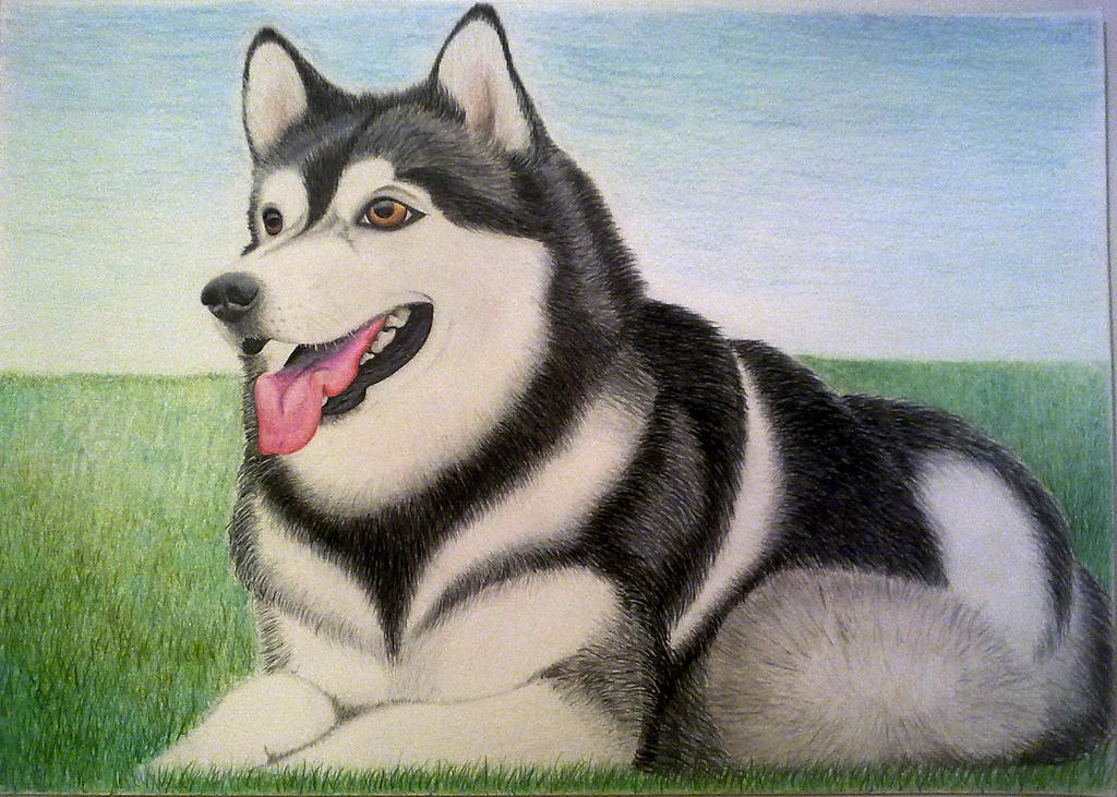 Simple Alaskan Malamute Chubby Adorable Dog - alaskan_malamute_by_evailable-d835zf3  Collection_916070  .jpg