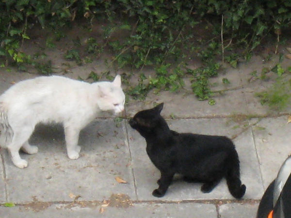 Cat S Vs Nexus P