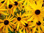 Desktop Flowers by perfect12386