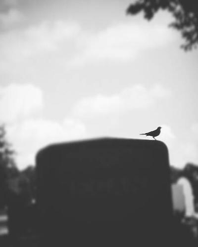 Grave Robin by WanderinAZ
