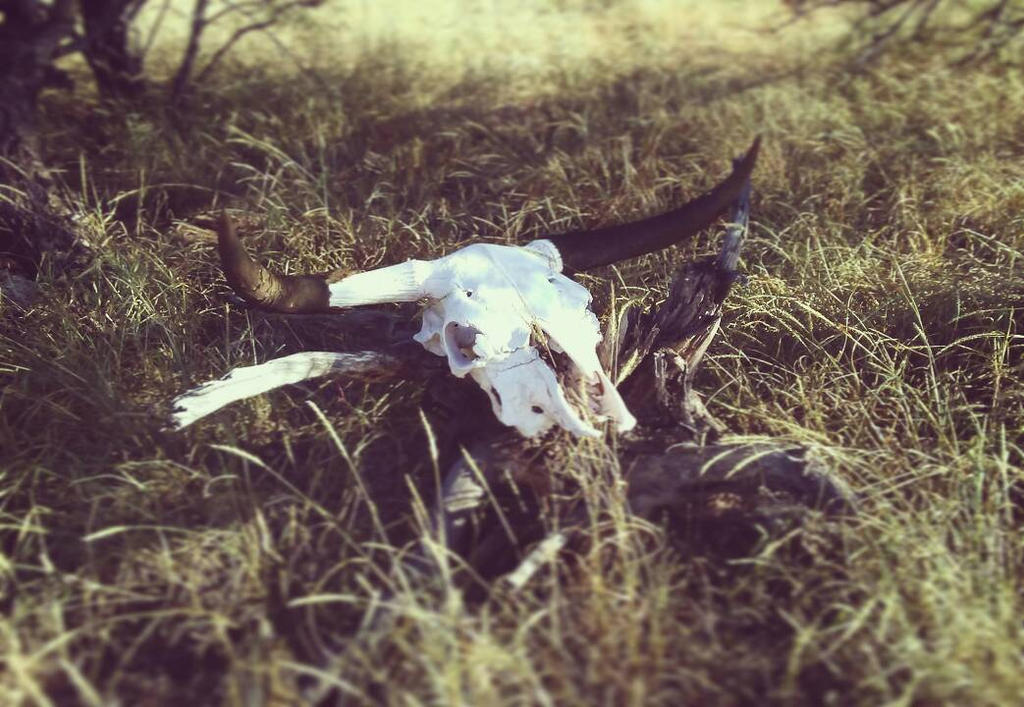 Cowskull by WanderinAZ