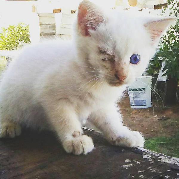 Kitten by WanderinAZ
