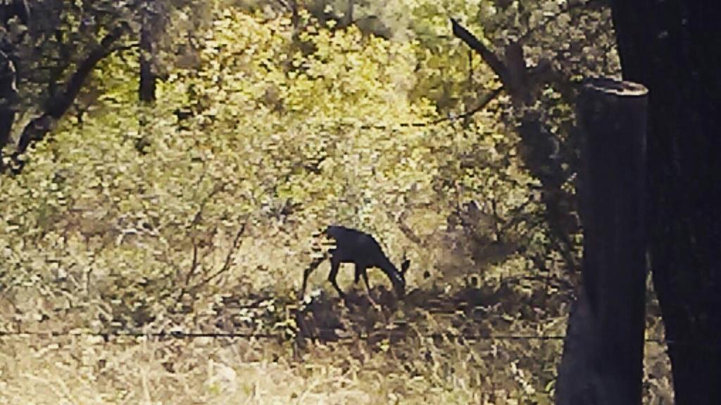Shadow Deer by WanderinAZ