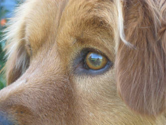 Dog stock 5