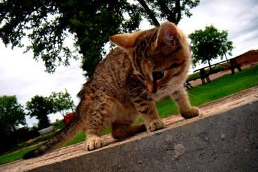 Cat by Terinek